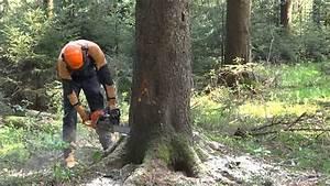 Baum Fällen Anleitung : baumf llung baum f llen f llen einer 30m fichte forstarbeit youtube ~ Yasmunasinghe.com Haus und Dekorationen