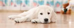 Pflegeleichte Haustiere Wohnung : diese hunde eignen sich f r die wohnungshaltung ~ Yasmunasinghe.com Haus und Dekorationen