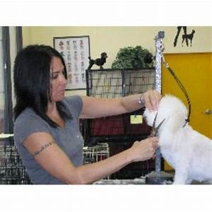 doggie stylz grooming las vegas nevada 89131 With affordable dog training las vegas
