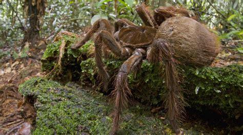 un entomologiste raconte ses rencontres avec la plus