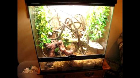 Crested gecko setup - YouTube