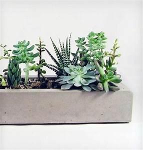 Pflegeleichte Zimmerpflanzen Mit Blüten : zimmerpflanzen bilder gem tliche deko ideen mit topfpflanzen ~ Sanjose-hotels-ca.com Haus und Dekorationen