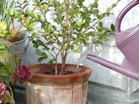 arroser le jardin et les plantes en pot en hiver les