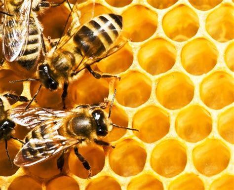 Verse honing kopen