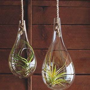 Vase Suspendu En Verre : terrarium suspendu en verre cadeau maestro ~ Teatrodelosmanantiales.com Idées de Décoration
