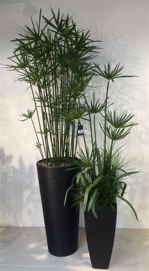 beautiful cyperus umbrella plant silk floral