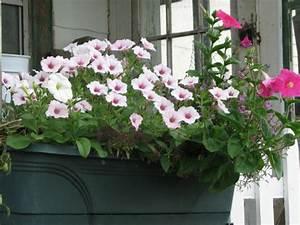 Balkonpflanzen Hängend Pflegeleicht : pflegeleichte balkonpflanzen den balkon leicht und schnell ~ Lizthompson.info Haus und Dekorationen