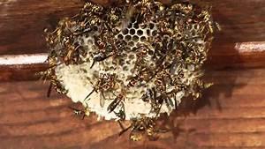 Wasps Under My Deck Mov