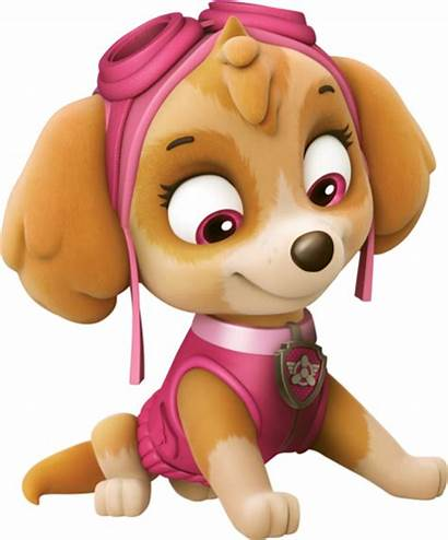 Skye Cockapoo Background Patrol Paw Canina Patrulha