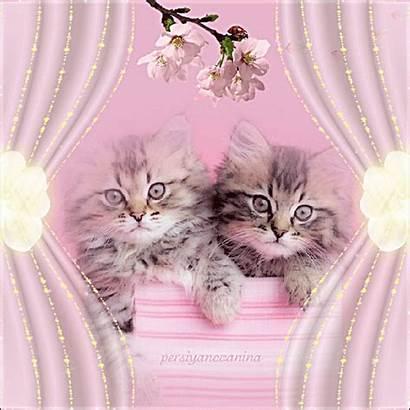 Pretty Kittens Animated Photobucket Lovethispic Gemerkt S1279