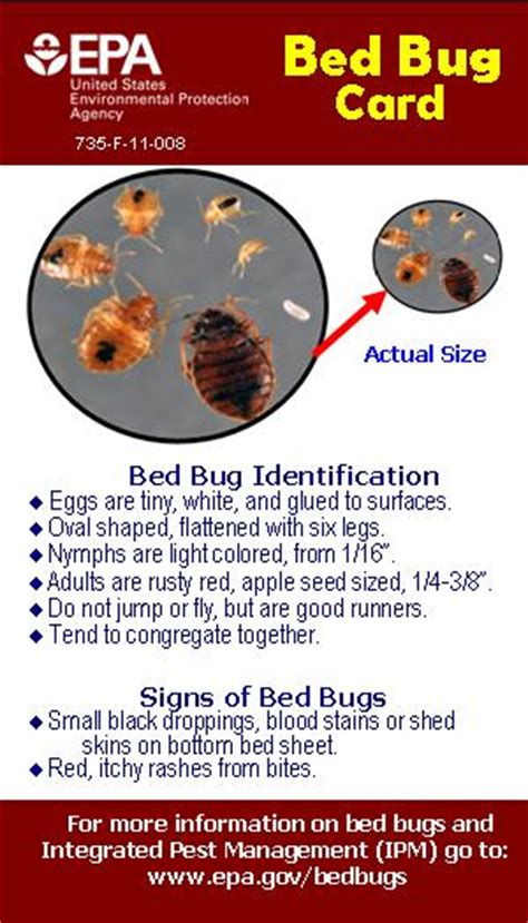 do bed bugs come out when the lights are on marvelous do bed bugs come out in the light f23 in wow