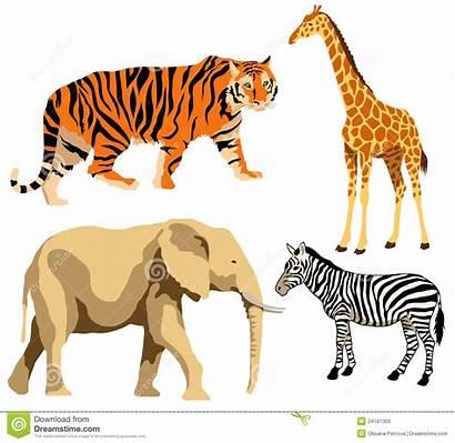 Animals African Animales Africanos Animal Exotic Illustrations
