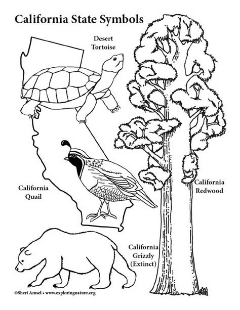 California State Symbols Coloring Pages California State Symbols Coloring Page