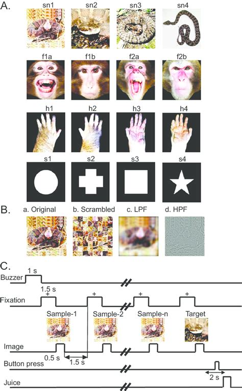 Fig. S3. Visual stimuli (A and B) and delayed nonmatching-to-sample...   Download Scientific Diagram