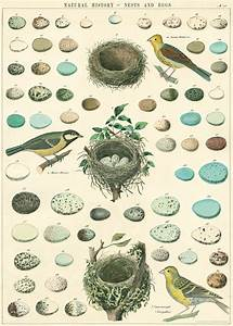 Nests, Birds, & Eggs Poster