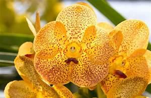 Orchideen Im Glas : vanda orchideen vanda orchideen orchideen und orchideen ~ A.2002-acura-tl-radio.info Haus und Dekorationen