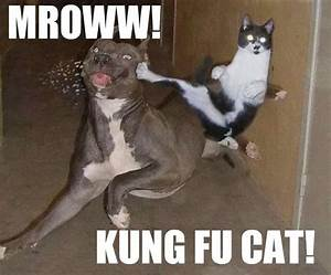 31 Funny Cats Pictures Make You Laugh Every Time