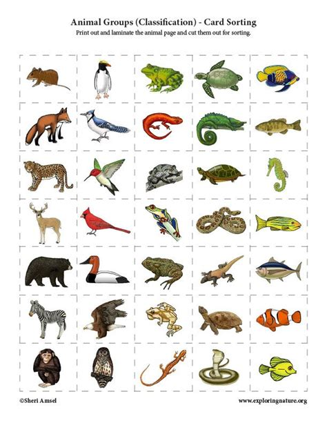 Learn about Animals and Classification on Exploringnature
