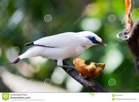 small bird eating stock photo image 40160245