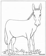 Donkey Domestic Animals Coloring Pages Drawing Pet Global Warming Shrek Animal Pitara Colouring Craft Getdrawings Drawings Tail Paintingvalley Outlines Drawn sketch template