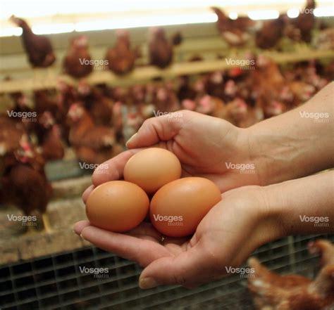 chambre agriculture 06 fait du jour un casse tête d œuf