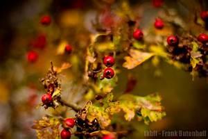 Die Farben Des Herbstes : frank butenhoff fotoblog farben des herbstes 1 ~ Lizthompson.info Haus und Dekorationen
