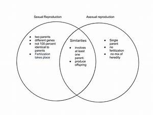 Asexual And Sexual Reprodution