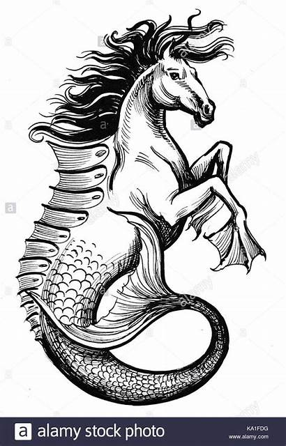Creatures Drawings Sea Hippocampus Creature Drawing Mystical