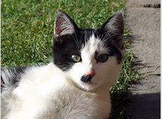Katze, schwarzweiss Kostenloses Hintergrundbild