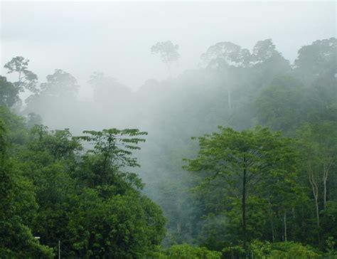 equatorial guinea africa climate rainforest tropical rainfall areas deforestation country travel equitorial rainforests location west located december forest deramakot logging