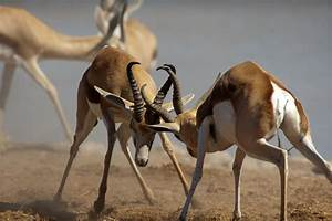12 Lesser-known Examples of Intraspecific Competition That ...