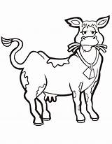 Cow Coloring Pages Eating Hay Cows Cute Printable Clipart Cartoon Clip Fat Cliparts Print Skinny Boyama Library Inek Sayfası Comments sketch template