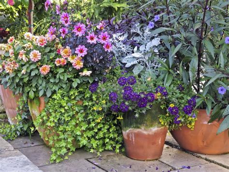Container Garden Placement