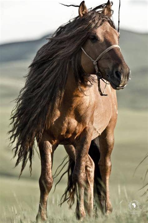 horses horse steppe pretty mane most wild animals nice cut manes stallion never herds sundiamonds breeds found experienced semi they
