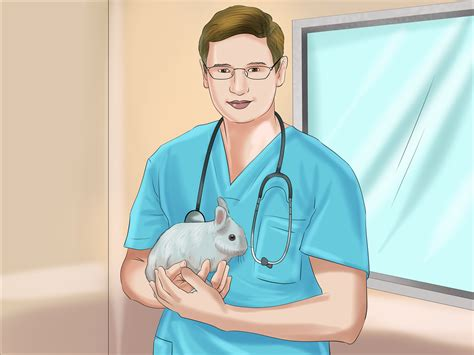 How To Determine The Sex Of A Rabbit 10 Steps With Pictures