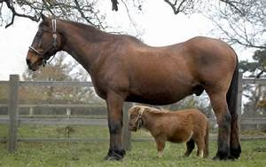 The 7 Smallest Horses in the World | HubPages