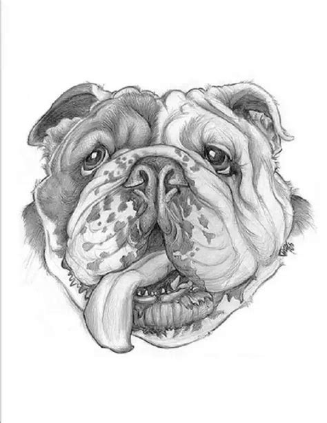 By J. Deloney | Bulldog images, Bear artwork