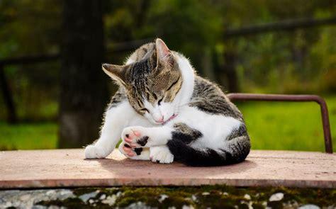 fakten die sie noch nicht ueber katzen kennen servus