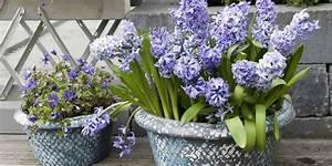 Hängepflanzen Für Balkonkästen : balkonkasten blumen pflanzen f r nassen boden ~ Michelbontemps.com Haus und Dekorationen