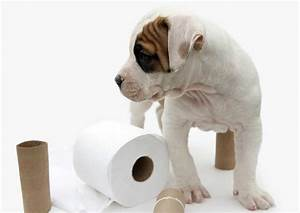 Loving pets welcome to loving pets for Dog potty training problems