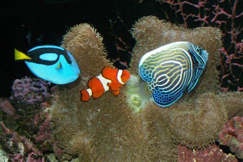 popular freshwater aquarium fish