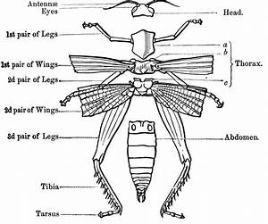 External Anatomy Of An Insect Skeleton