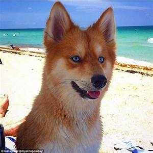 Fox Looking Dog Breeds | www.pixshark.com - Images ...
