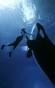 Taima, 20-year-old captive killer whale, dies giving birth ...