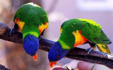 Попугаи красивые картинки 40 фото Прикольные