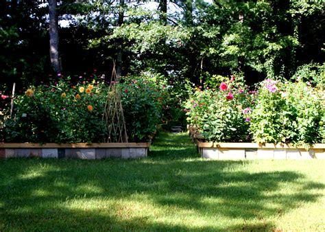 Backyard Garden Florist backyard cutting flower garden tour chickens tilly s nest