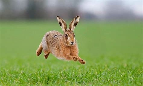 rabbit air top 19 highest jumping animals in the