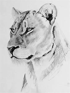 The 25+ best ideas about Lioness Tattoo on Pinterest ...