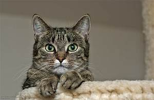 Katze Im Haus Halten : siam okh katzen forum gesucht seite 2 mausebande forum ~ Lizthompson.info Haus und Dekorationen