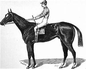 Aristides  Horse